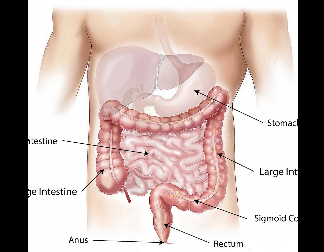 大腸のサイン